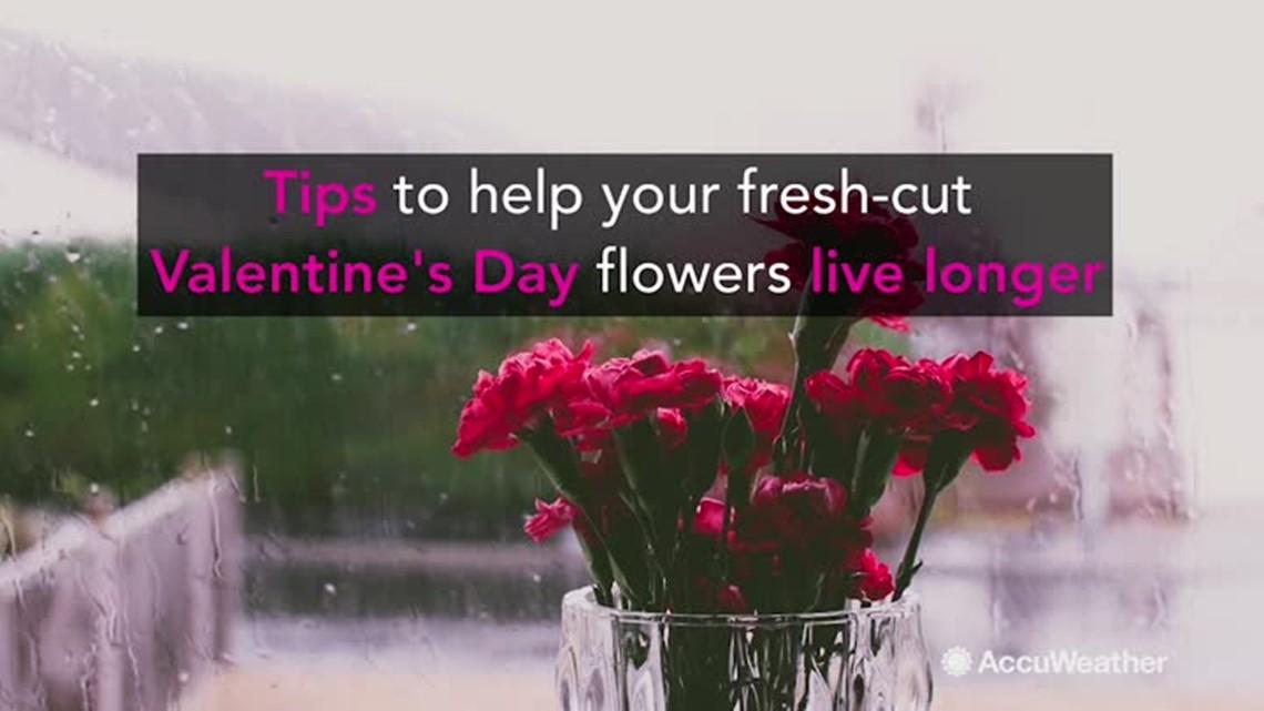 tips to keep your valentine 39 s day flowers alive longer. Black Bedroom Furniture Sets. Home Design Ideas