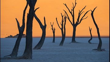 Not a Painting: Skeleton Trees in Middle of the Desert Create a Surreal Scene