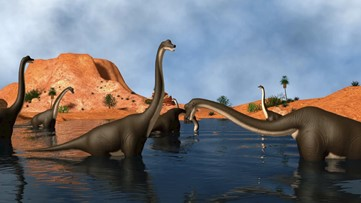 The Surprising Length of a Dinosaur Day