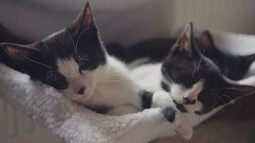 Do Cats Recognize Their Names?