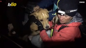 Braving the Elements! Ski Instructors Climb Snowy Mountain to Rescue Lost Dogs