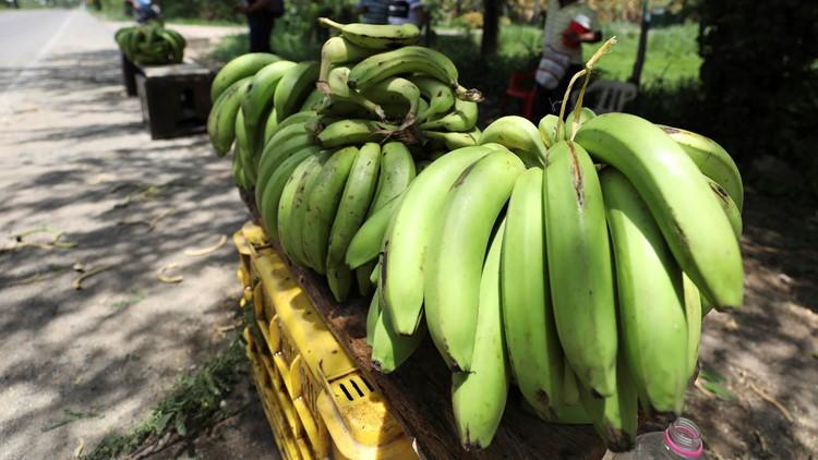 Colombia Bananas At Risk