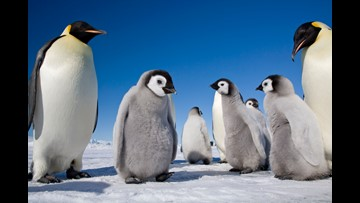 New book chronicles the plight of emperor penguins in Antarctica
