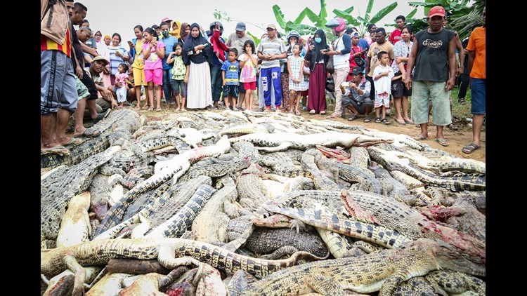 EPA INDONESIA CRIME CROCODILE CLJ CRIME IDN WE