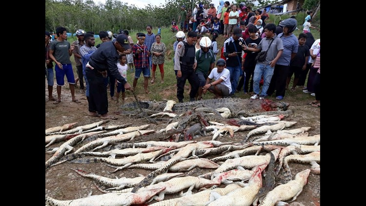 A mob in Indonesia armed with knives, hammers and clubs slaughtered nearly 300 crocodiles at a sanctuary after a man was killed by one of the reptiles.