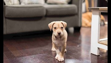 7 perfect puppies to adopt now in Charlotte