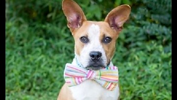 7 lovable pups to adopt now in Charlotte
