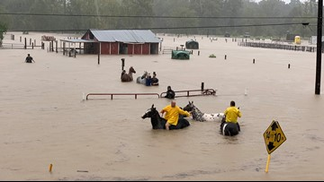 WATCH: More than 50 horses trapped in chest-deep floodwaters rescued by volunteers
