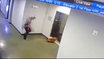 Close call! Man saves dog from dangerous situation as elevator doors separate fur baby from owner