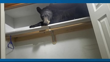 Bear locks himself in Montana home, naps in closet