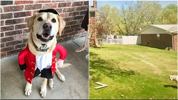 Illinois dog who died in June gives family one last laugh on Google Street View
