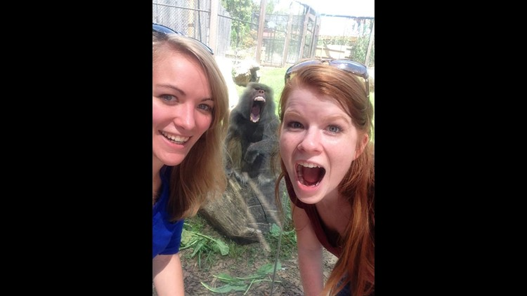 Zoo visitor gets photo bombed by baboon