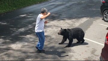 WATCH: A Tennessee park visitor confronted a momma bear and her cubs, so she charged