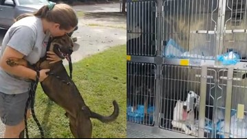 Charlotte animal shelter welcomes nine dogs evacuating from SC