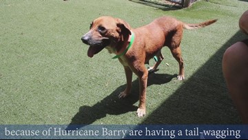 Meet Liv, London, and Balto: Shelter dogs displaced by Barry settling in Charlotte