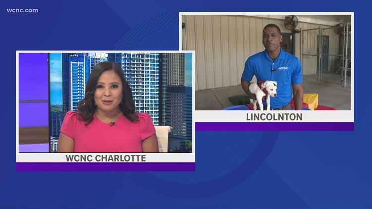 Clear The Shelters in Lincolnton, North Carolina!