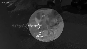 Surveillance video shows man tearing down Christmas lights from South End home