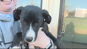 National Puppy Day: Adopt a furry friend from the Humane Society