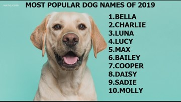 The top 10 most popular dog names of 2019