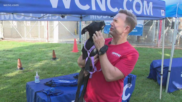 Help Clear The Shelters for adoption day
