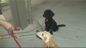 Charlotte Knights hosting Bark in the Park promotion Monday