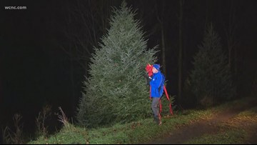 North Carolina farmer grows White House Christmas tree