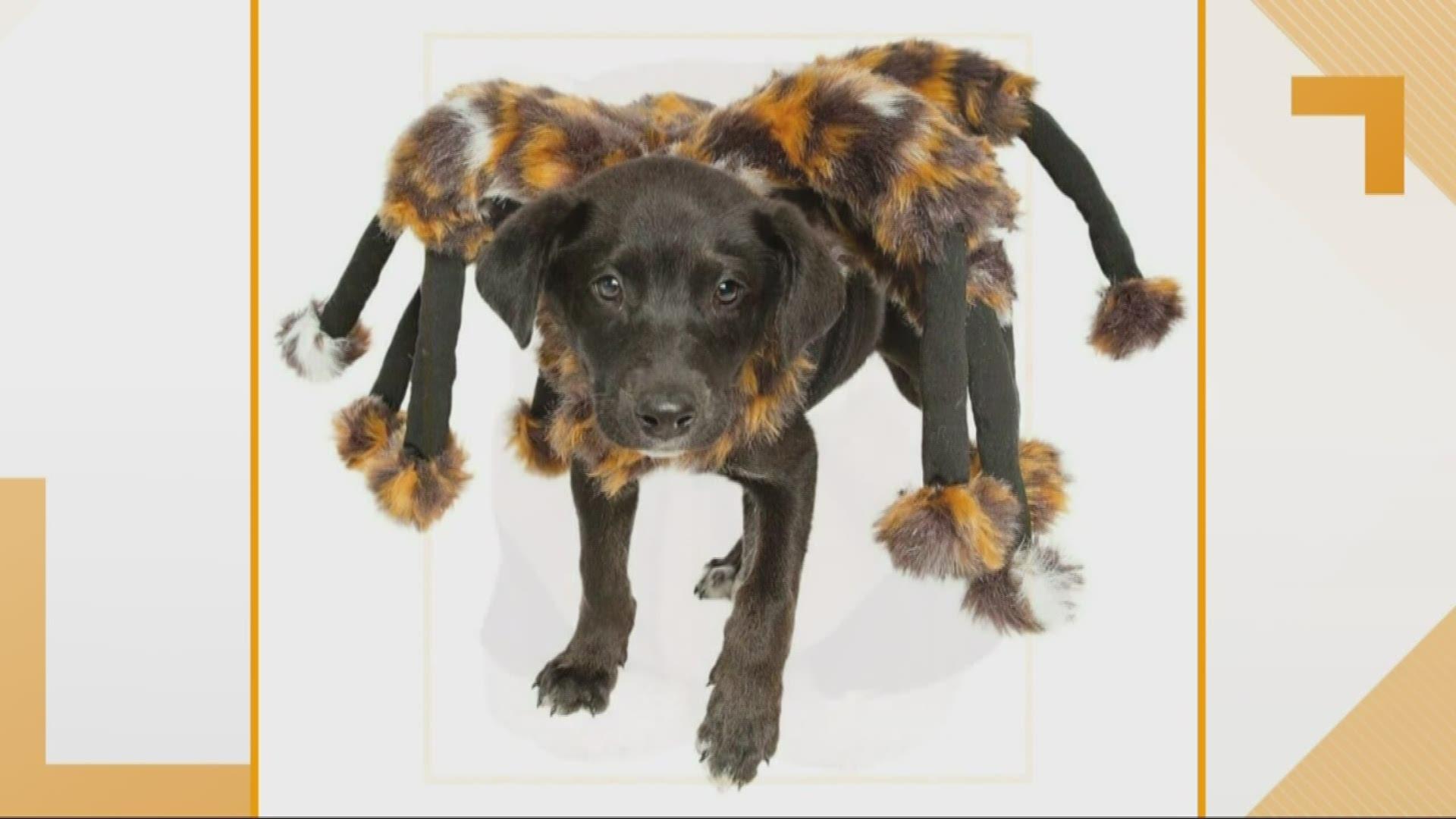 Harry Potter Dog Halloween Costumes.Best Halloween Dog Costumes For 2019 Batman Harry Potter Wcnc Com