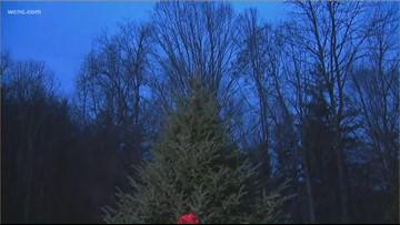 NC Christmas tree chosen for White House