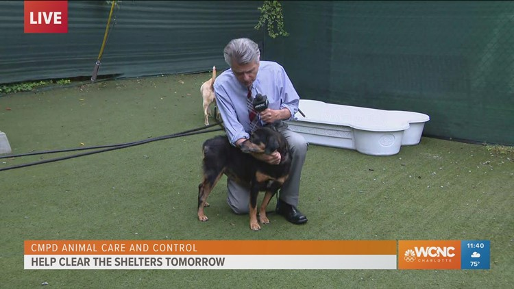 Larry Sprinkle LIVE from Charlotte Humane Society for Clear the Shelters