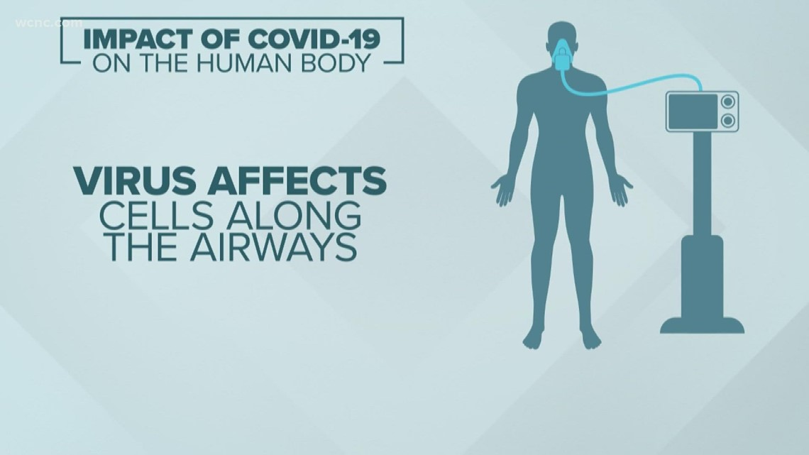 Why COVID-19 is so dangerous