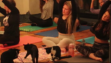 Charlotte business hosts weekly cat yoga class