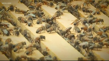 Spring is heating up and the bees are back in the Queen City
