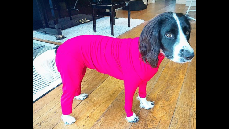 The Shed Defender®, dreamed up by Tyson Walters, is a lightweight, breathable outfit for your dog that keeps dog hair, dander, and allergens at bay.