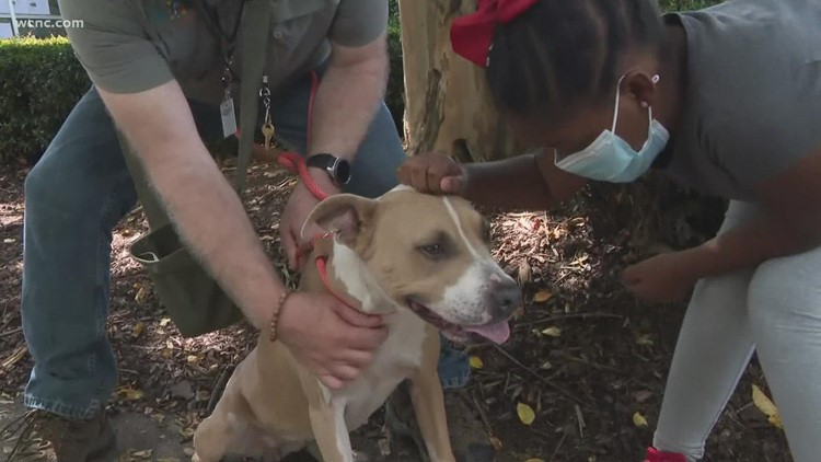 Animals find fur-ever homes on Clear The Shelters Day