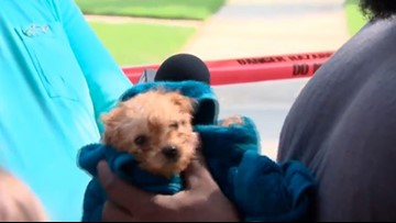 Firefighters rescue puppy trapped in Charlotte sewer pipe