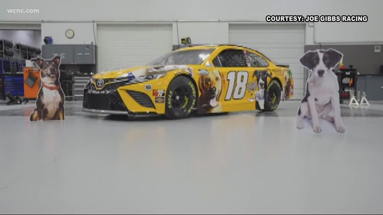 Busch featuring adoptable dogs on No. 18 car
