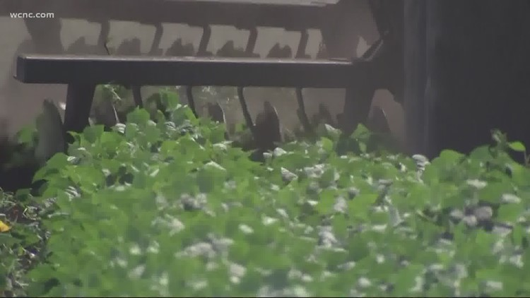 Matthews police warn of seed scam