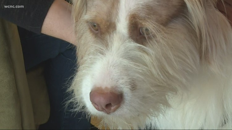 Charlotte vet saves dog's life with 3D printer