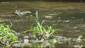 You can help keep our creeks clean: Char-Meck Storm Water Service