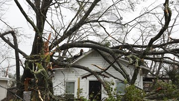 What to do if a tree falls on your home or car during a storm