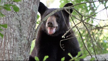 78-year-old NC man says he punched mama bear in the nose