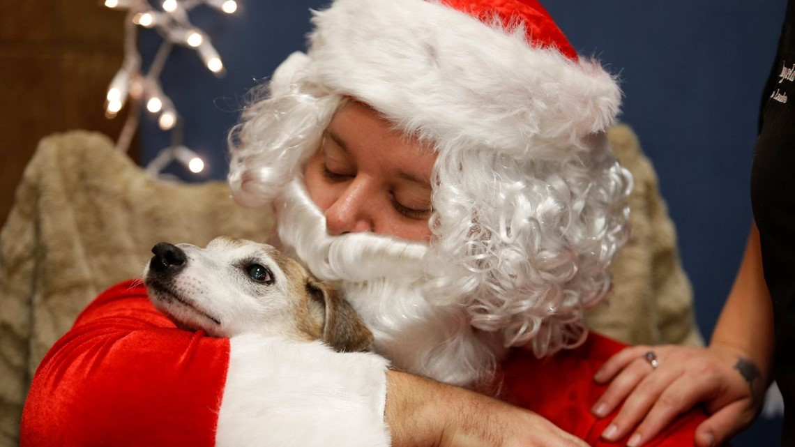 Petsmart Christmas Eve Hours.The Sweetest Thing Nc Dog With Terminal Cancer Working On Bucket