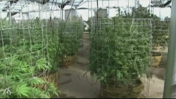 Charlotte representative hopes to approach marijuana debate