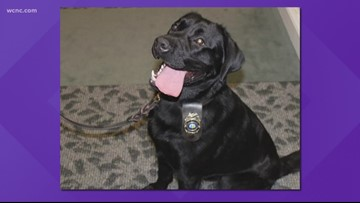 Matthews Police Department's newest recruit sniffs out crime