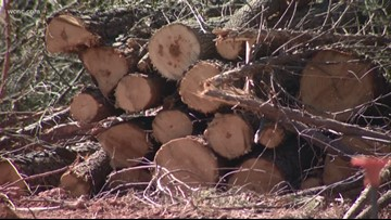 Developer mistakenly cuts 200 protected trees in Matthews