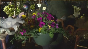 Welcome spring in Charlotte at Wing Haven's Plant Sale