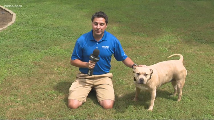 Clear the Shelters: Chris Mulcahy's dog adoption story