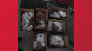 'We need your help' | Rescue makes social media plea after dozens of rabbits are dropped off