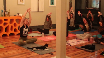 Cats on the mats: Charlotte cat café hosts weekly cat yoga