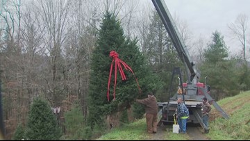 Christmas tree prices going up this year
